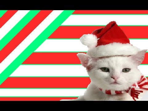 FUNNY CAT VIDEOS PART 9