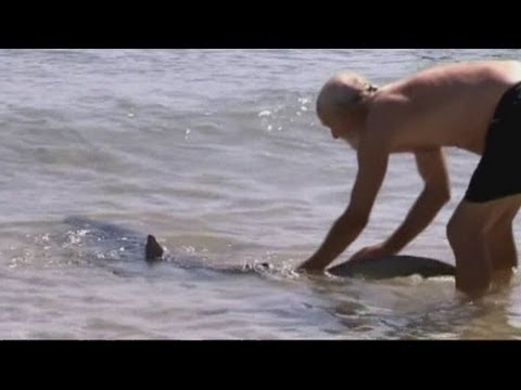 Dramatic video: Man pushes shark back into sea in Australia