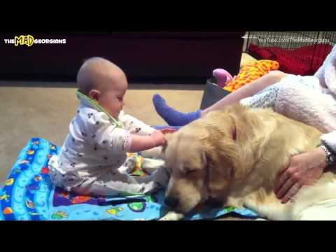 Babies And Dogs | Compilation 2013 | February
