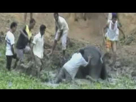 Baby elephant rescued from ditch in India