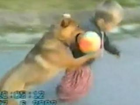 Funny Animals – Funny Dog plays TAKEDOWN