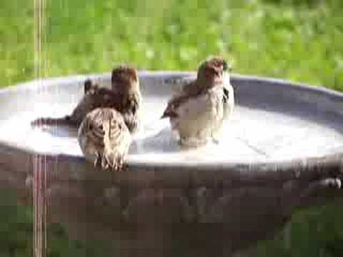 Birds In The Bird Bath