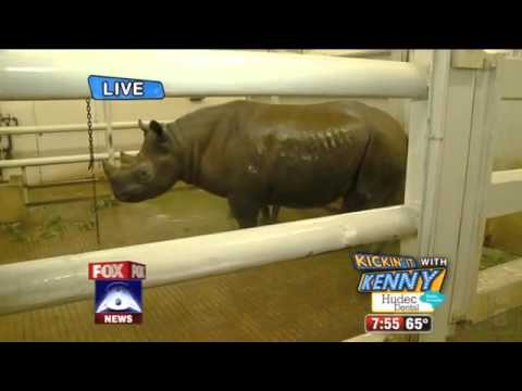 Rhino Farts Cracking Up Reporter News Blooper