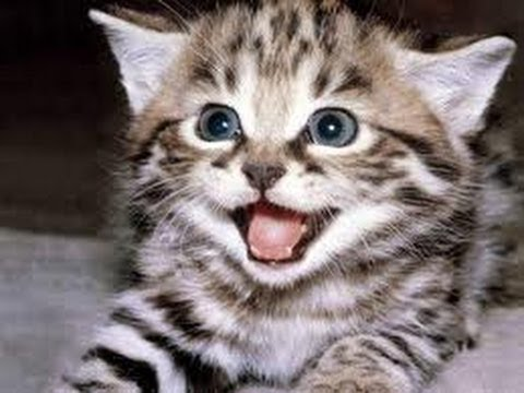 FUNNY CAT VIDEOS PART 2