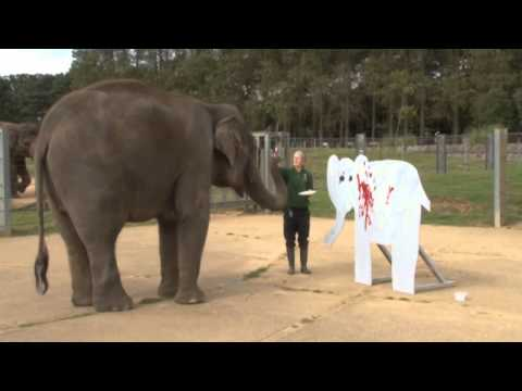 Asian elephant shows off her painting skills