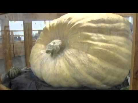 World's biggest pumpkin weighed in at Massachusetts fair