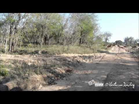 Incredible: Leopard strike caught on camera