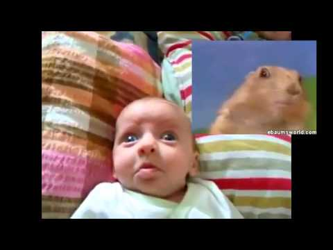 Funny Babies Videos – Dramatic Chipmunk Takes Over Cute Baby