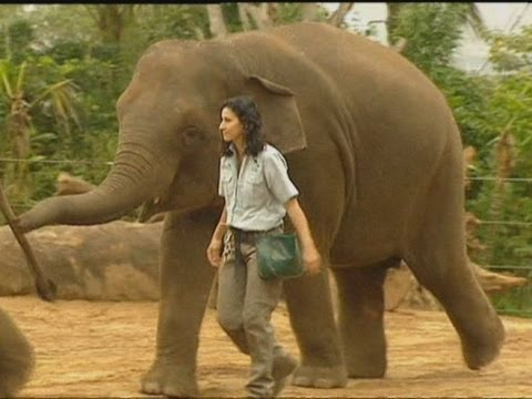 Sydney zoo keeper crushed by Mr Shuffles the Asian elephant