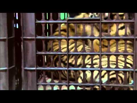 Cute tiger cubs: Man tries to smuggle the animals through Thailand