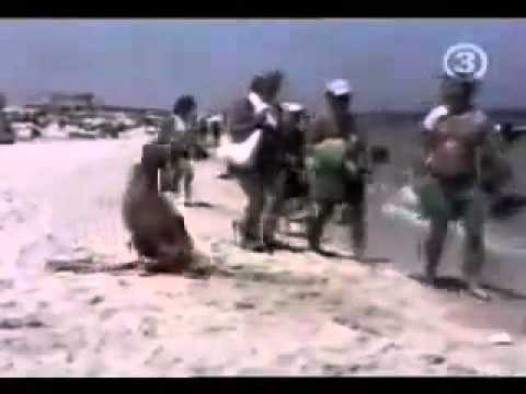 Funny Videos Of People Falling At The Beach