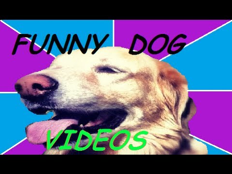 FUNNY DOG VIDEOS PART 3