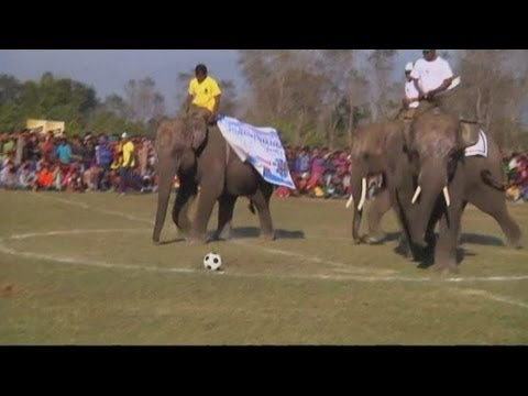 Elephants play a football match in Nepal